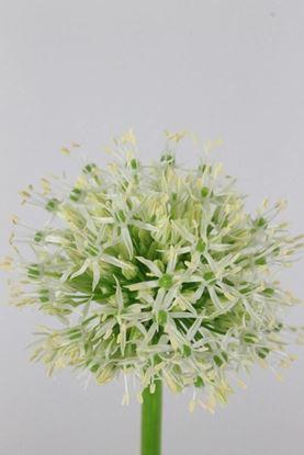 Picture of Allium Mount Everest