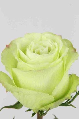Picture of Rose EC Lemonade