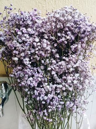 Picture of Dyed Gypsophilia